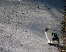 На отсрещния тротоар