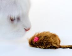 Игра на котка и мишка