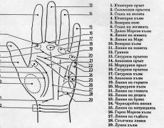 Колко деца ще имаш? Погледни дланта си!