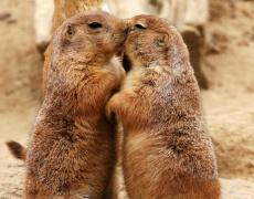 Днес е празникът на целувките! Не ги пестете!