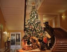 Dolce & Gabbana посвещават коледна елха на децата