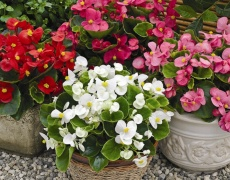 Как да поливате цветята у дома