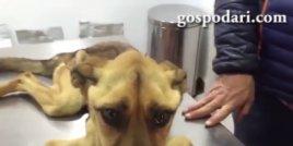 Куче получава шанс за нов живот