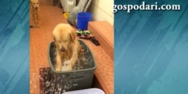 Куче си взима душ за първи път