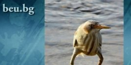 Дългокрака птица стана повод за нова фотошоп битка