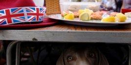 Кучетата могат да бъдат най-добрият приятел на човека, но ново изследване показва, че те могат да бъдат и умишлено подли
