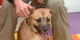 Куче е обявено за герой, след като спасява семейство от пожар