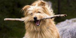 """Играта на """"Донеси"""" с вашето куче може да е вредна за него"""