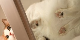 Очарователни котки върху стъклени маси