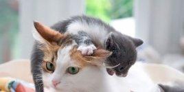 Снимки на животни, които показват какво е да си майка