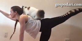 Йога упражнения с котка