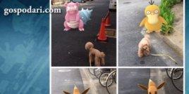 Снимки показват, че домашните любимци виждат покемони