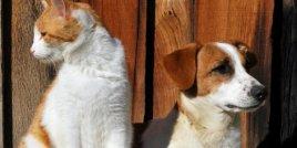 Кучето или котката - кой е по-добрият домашен любимец?