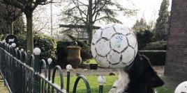 Това куче винаги хвърля топката на улицата.