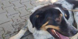 Още невероятни истории с бездомни кученца