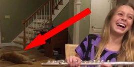 Момиче практикува свирене на флейта. Сега гледайте как реагира кучето й ... Забавно!