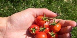 Тайната съставка на доматите, която кожата ви обича