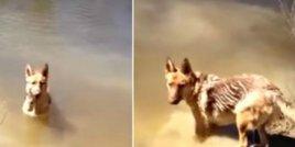Забавната реакция на куче, което трябва да излиза от водата