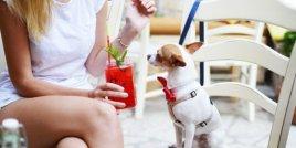7 неща, които никога не трябва да правите с кучето си