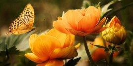Какво казва рожденото ви цвете за вашата личност