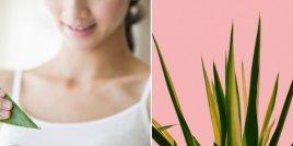 5 полезни свойства на алое вера за кожата