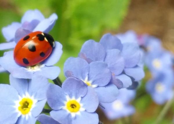 10 неща, които ще донесат късмет в дома ви