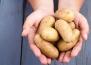 Полезните свойства на картофите