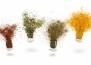5 билки против стареене, които могат да ви помогнат да изглеждате по-млади