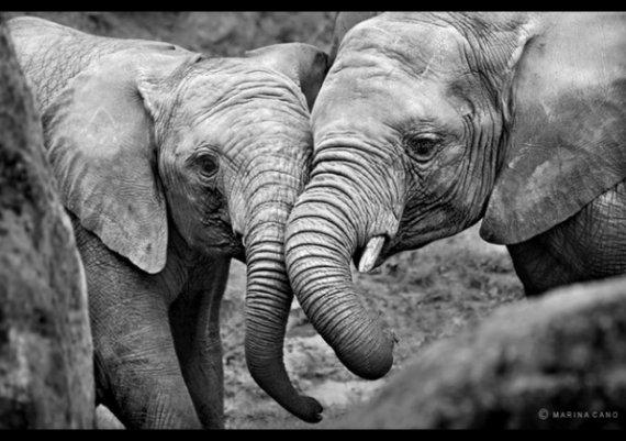 Най-милите снимки на животни