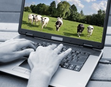 Животни превземат Facebook