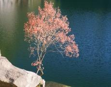Кое е вашето рождено дърво? (част 2)