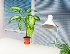Цветя в саксия срещу стрес в офиса