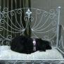Хотел за кучета във Франция