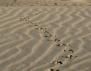 """""""Стъпки в пясъка"""" на Антоанета Баева"""