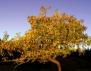 Кое е вашето рождено дърво? (Част 4)