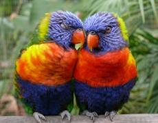 Тайните на вечната любов (част 1)