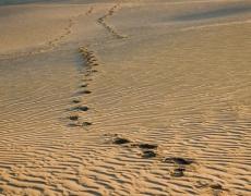 Пясък срещу вятъра