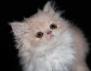 Котките превръщат жените в нимфоманки