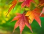 Уникално красив маникюр за есента (видео)