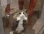 Най-смешните котки, които сте виждали (Част 2)