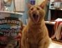 Най-смешните котки, които сте виждали (Част 1)