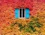 Най-вцепеняващите есенни пейзажи, които някога сте виждали!