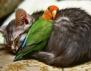 Невероятно! Вижте колко голяма може да бъде любовта на животните (снимки)