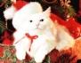 Смях! Как се опакова котка като коледен подарък