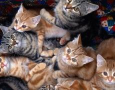 Колко котки са твърде много котки?