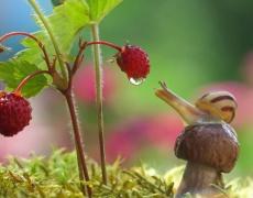 Красота! Вижте вълшебния свят на охлювите (снимки)