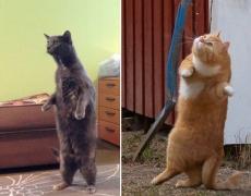 28 доказателства, че котките и сурикатите имат много общо!