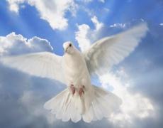 Притча за прошката