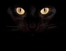 Какъв вид котка си според характера си?