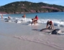 30 делфина на сушата и един пример за истинска човещина! Трогателно и силно видео!